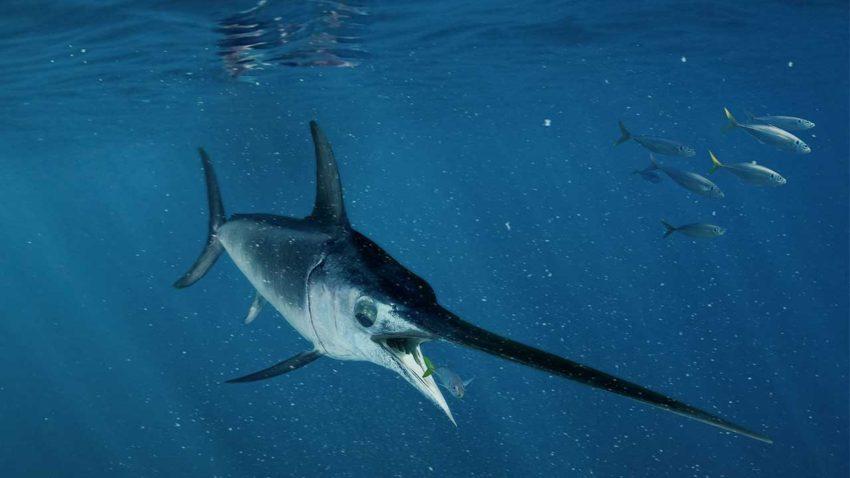 fresh fish malta