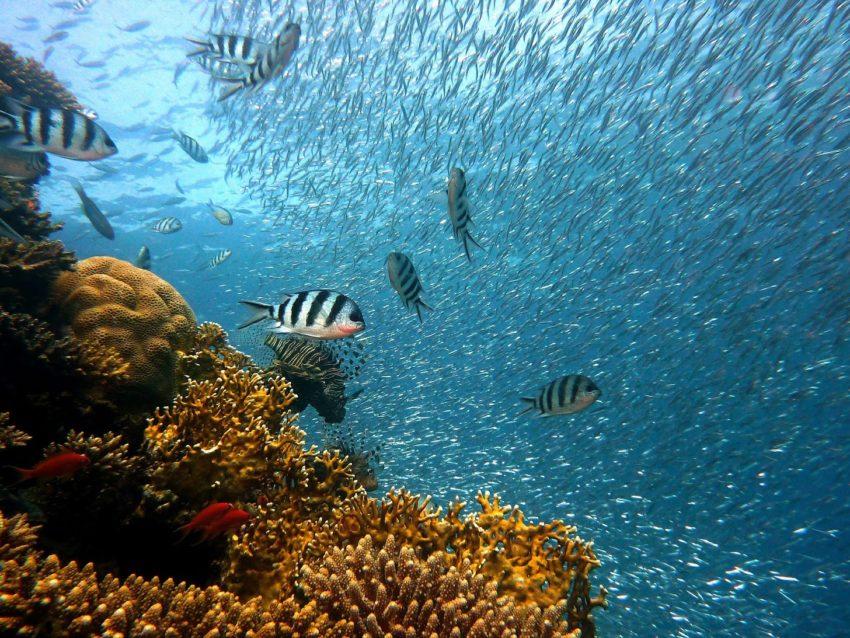 fish swimming in ocean